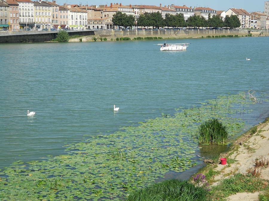 Swans, Macon France