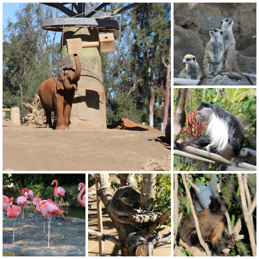 San Diego Zoo Peek | Food, Booze, & Baggage