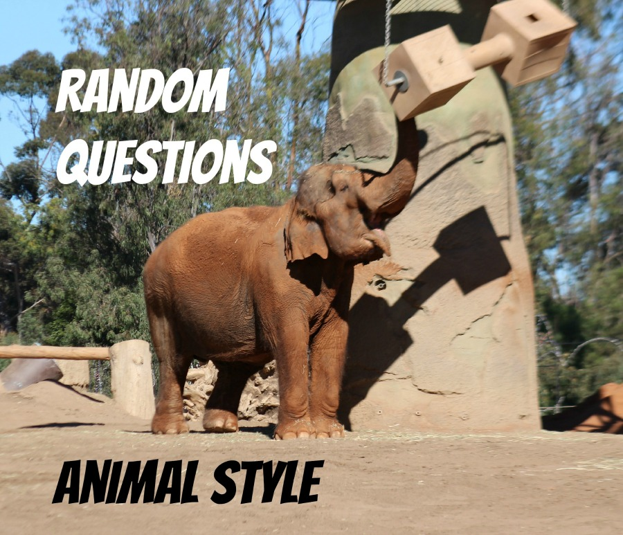 Random Questions Animal Style