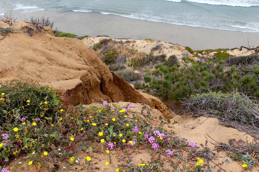 Guy-Fleming-Trail-Beach-and-Landscape