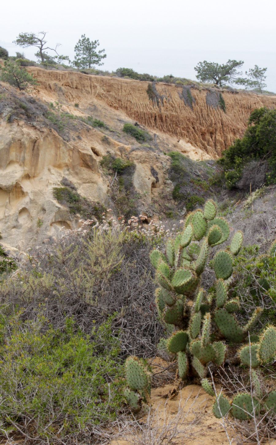 Parry-Grove-Trail-Catus-plus-cliffs