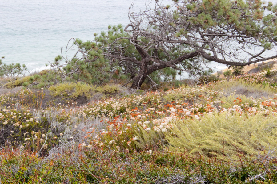 Parry-Grove-Trial-Flowers-and-Ocean-View