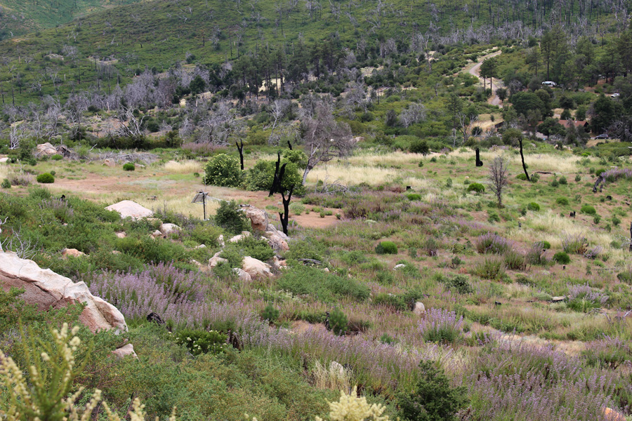 Field View at Cuyamaca Rancho State Park