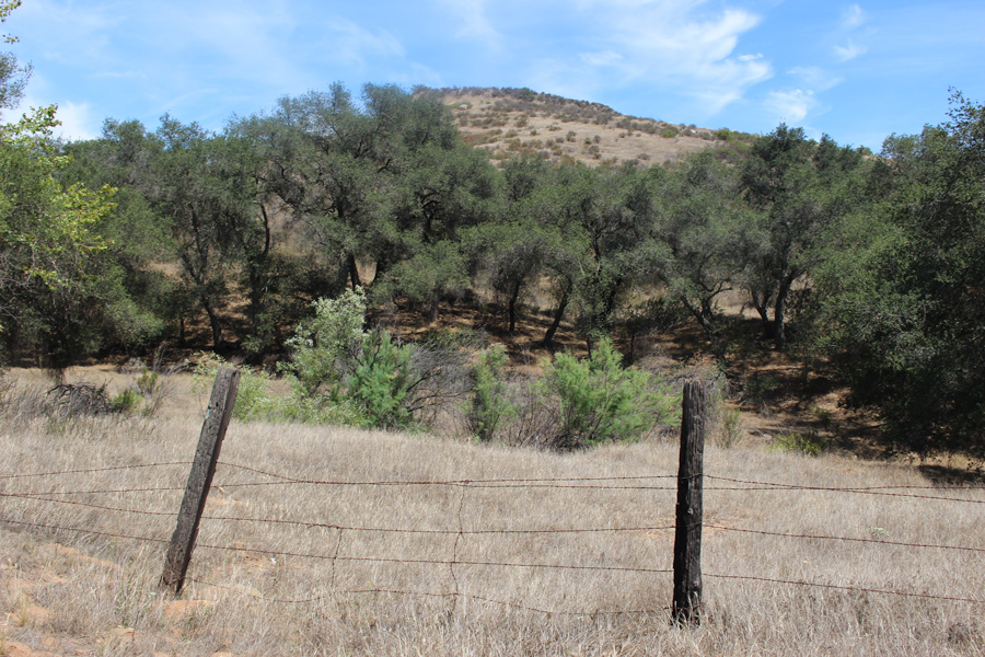 Hollenbeck-Canyon-Fence-and-Trees