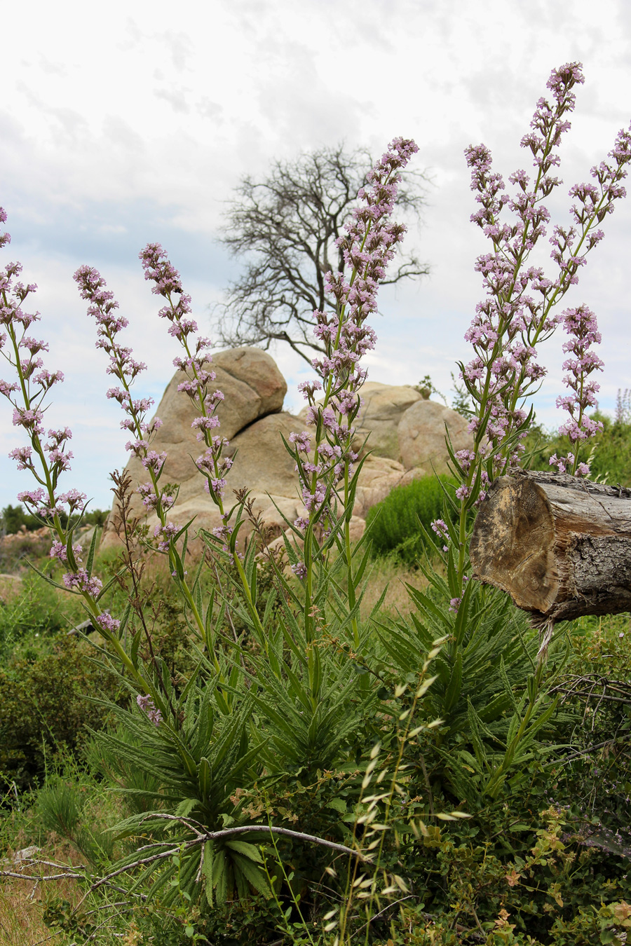 Rocks-Flowers-Trees-All-My-on-Stonewall-Trail