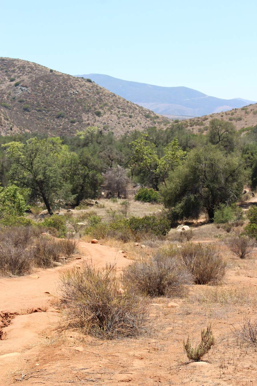 Trail-in-Hollenbeck-Canyon
