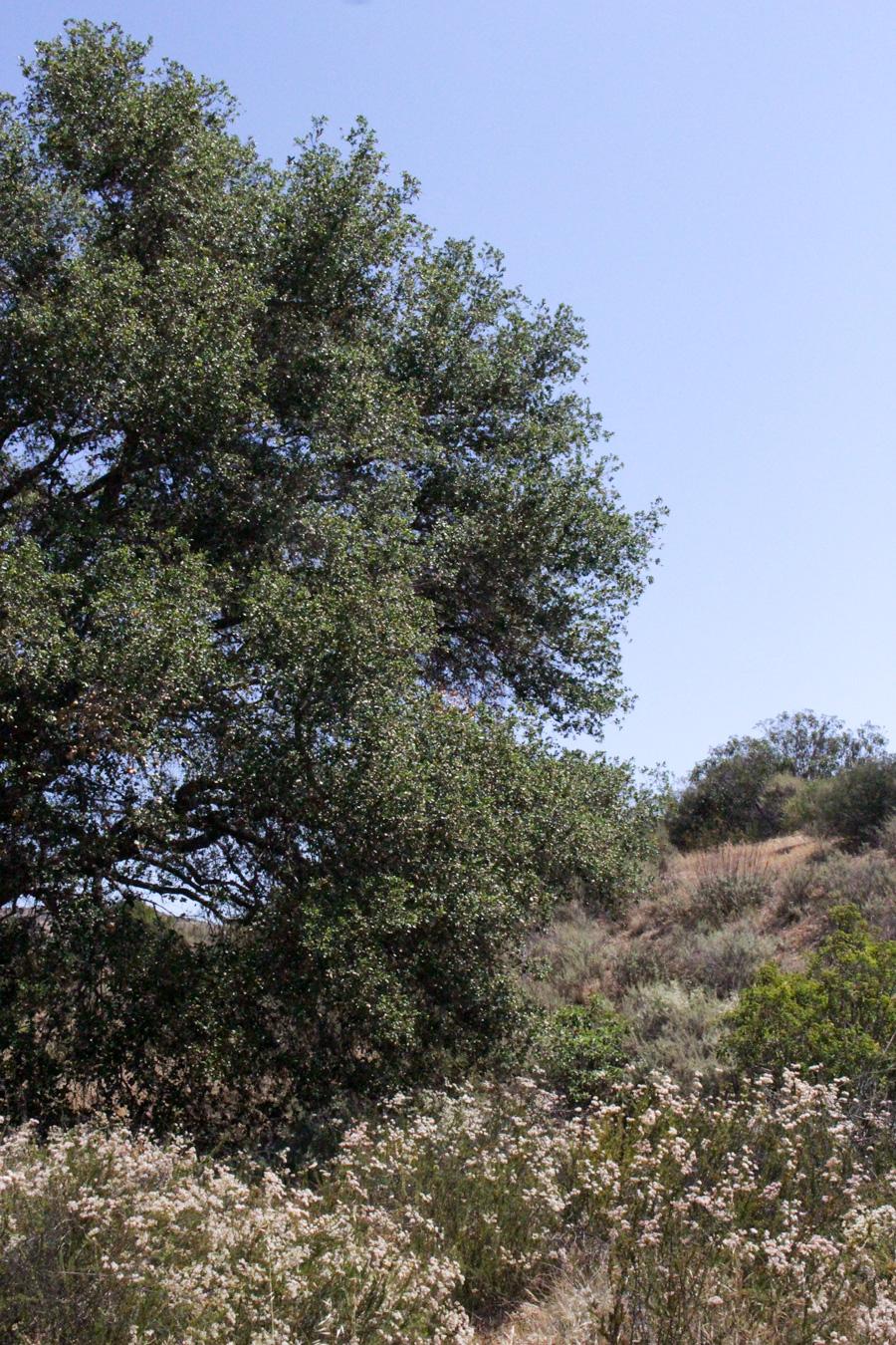 Tree-along-Grassland-Loop-Trail