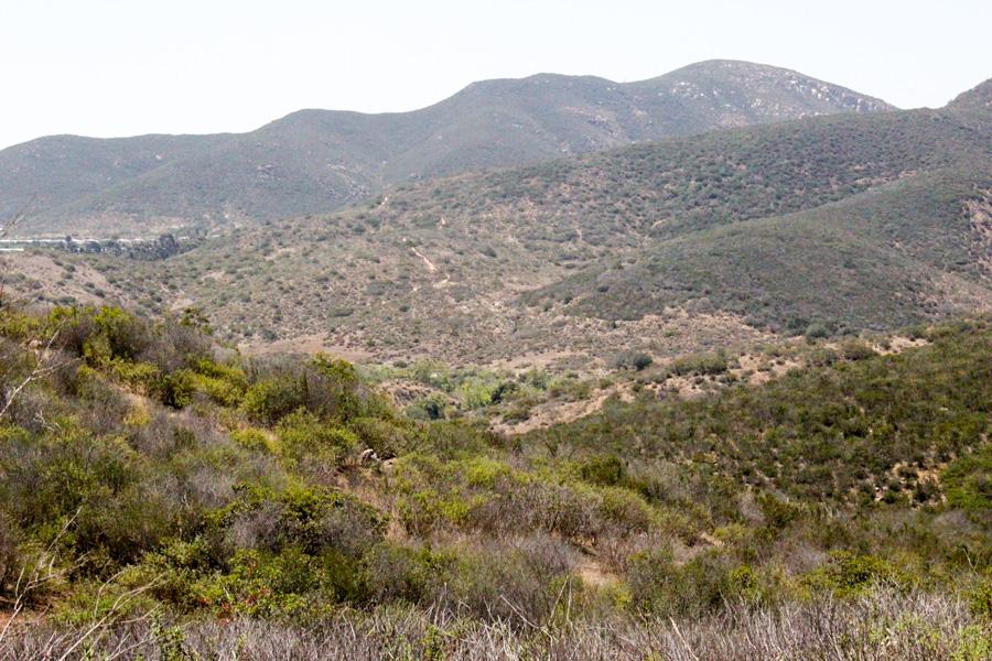 View-along-Grassland-Loop-Trail
