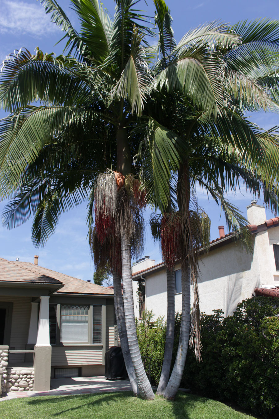 SD-House-1-Palm-Tree