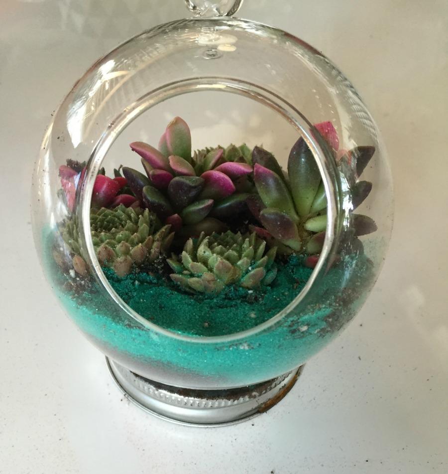 Succulent Garden from Pigment