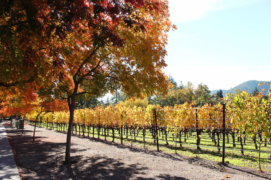 Yountville Vineyard