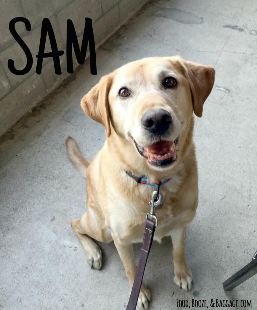 Intro to Sam